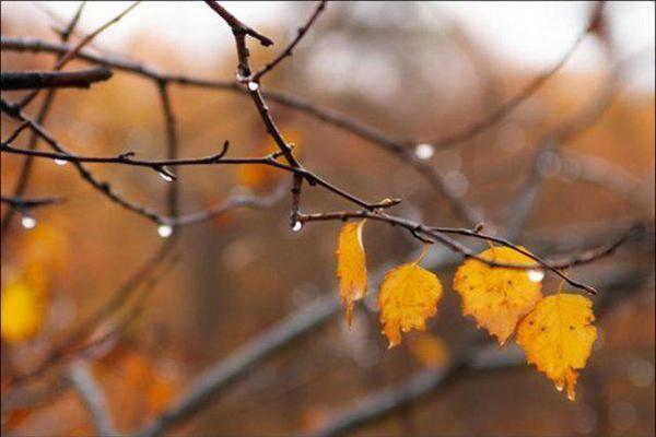 leaves or few