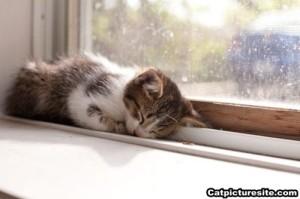 Cat_Picture_6