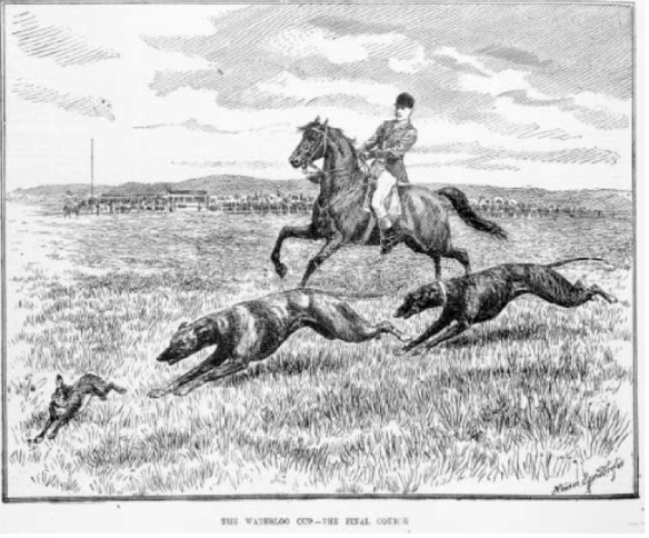 Two greyhounds coursing a hare. The judge on horseback counted the number of times the dogs turned the hare