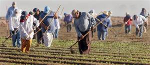 migrant-workers-2