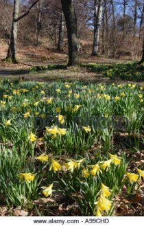 ullswater-wordsworth-daffodils-cumbria-lake-district-national-park-a99chd.jpg